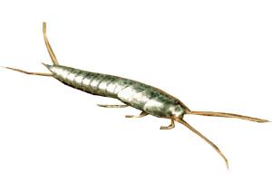 Insectes rampant de maison - Insecte dans les maisons ...